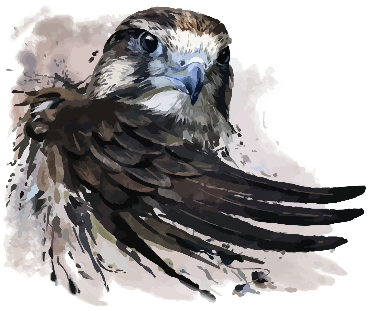 Drawing eagles watercolor. Painting falcon illustration vector