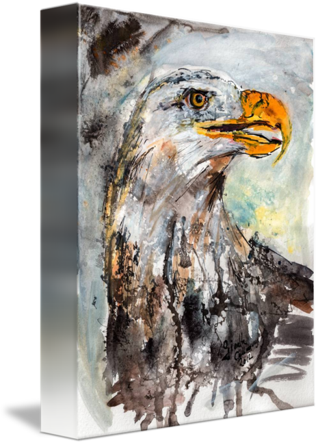 Drawing eagles watercolor. Bald eagle wildlife by