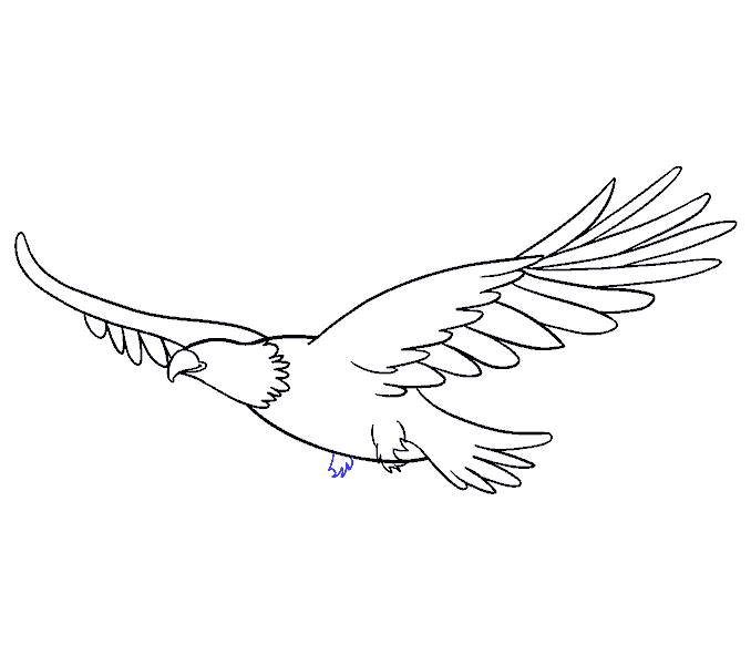 Drawing Eagles Anime Transparent Png Clipart Free Download Ya