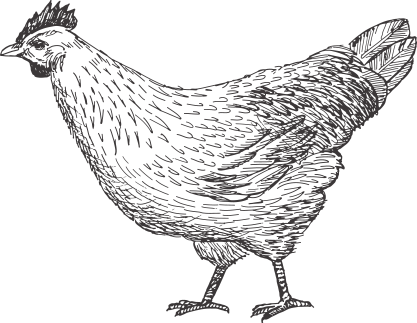 Drawing egg hen. Research the iowa council