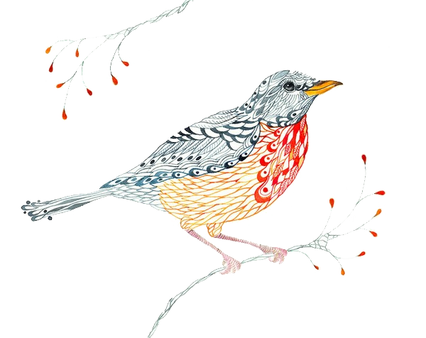 Drawing elements bird. European robin visual arts