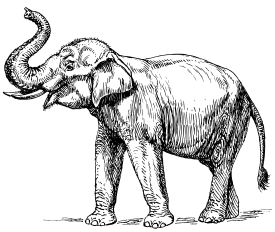 Drawing elephants african elephant. Anecdotes of from the