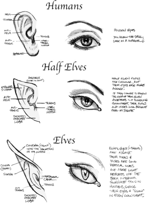 Sketching drawing eye. Human half elves eyes