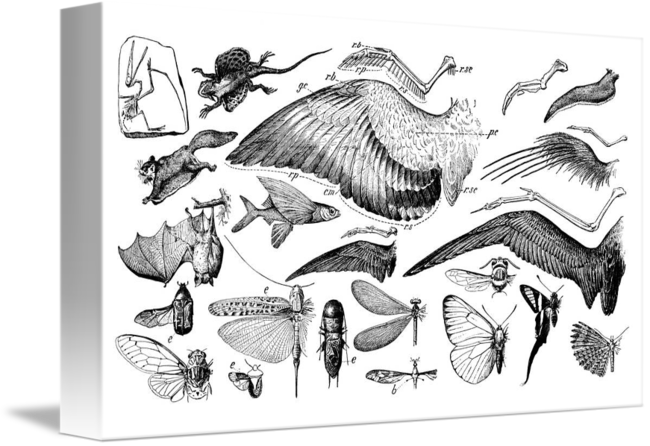 Drawing evolution. Of flight by gil