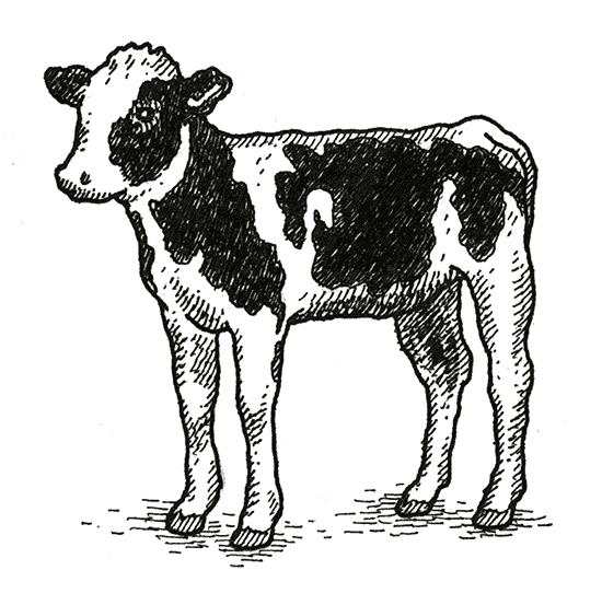 Drawing farmer cow. Read the whole series