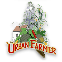 Drawing farmer cultivation. Cuba overview the urban