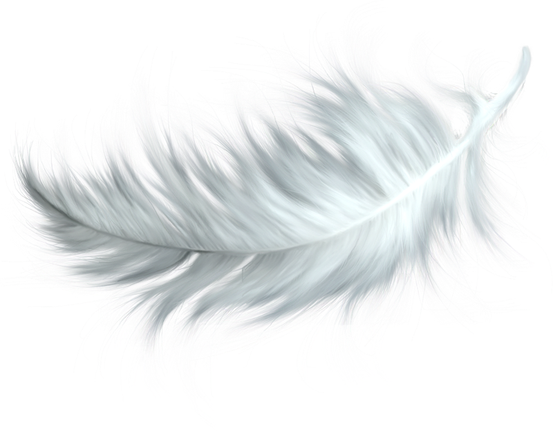 Drawing feather angel. Clip art transprent png