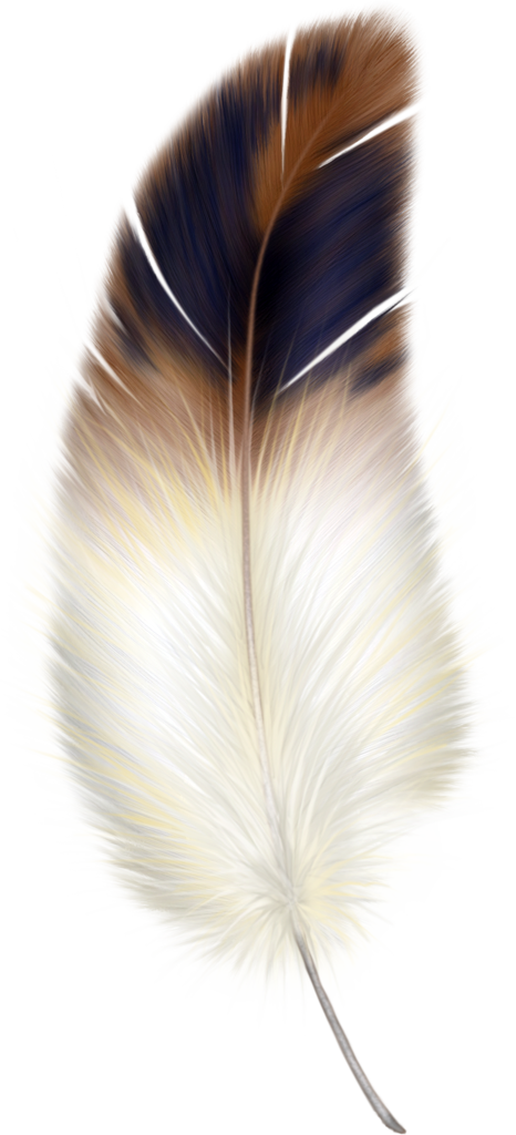 Drawing feather beautiful. Brown and white clipart