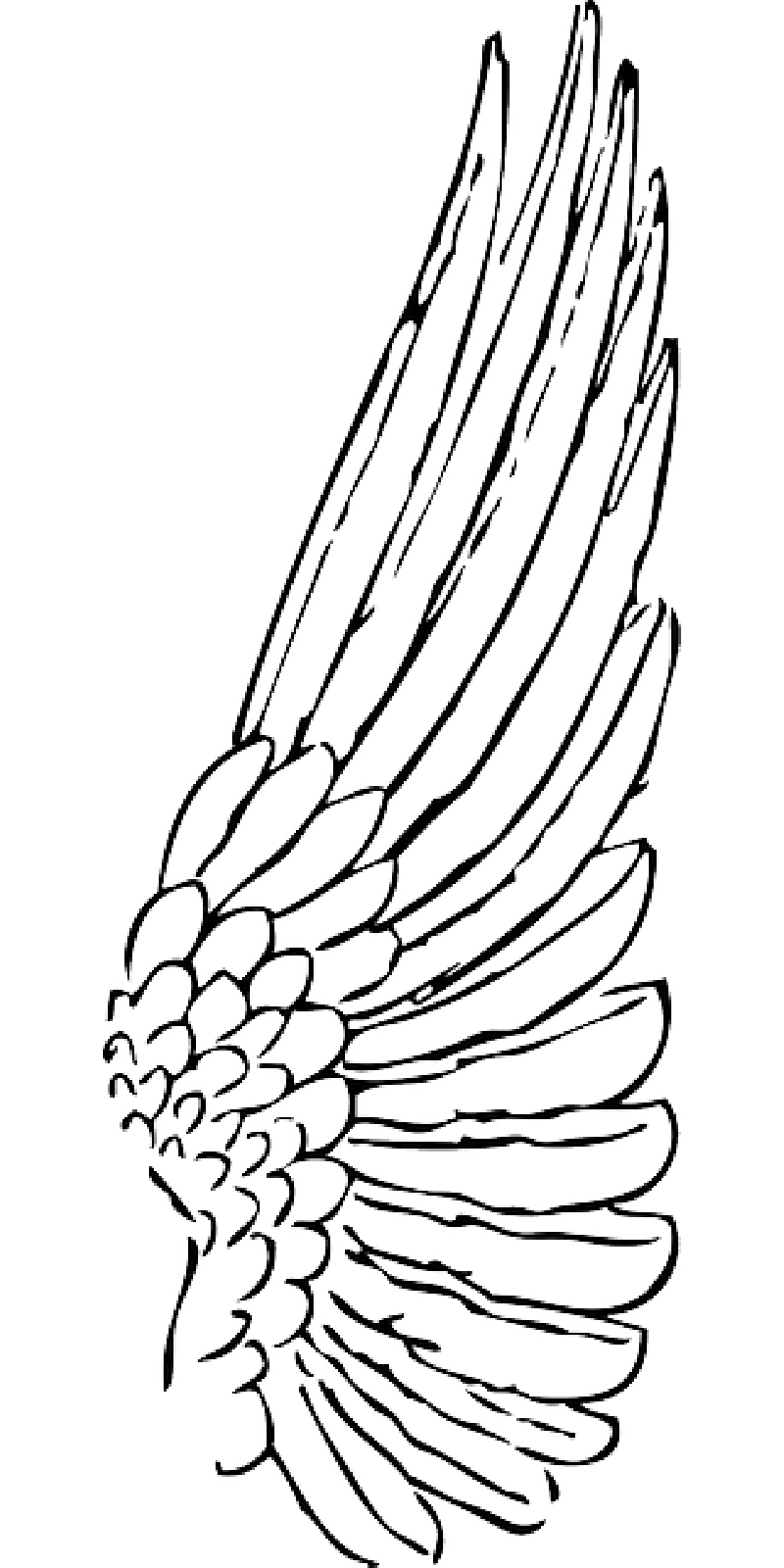 Drawing feather outline. Spread png download
