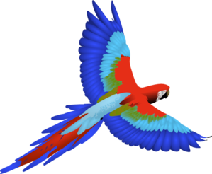 Drawing feather parrot. Clip art at clker