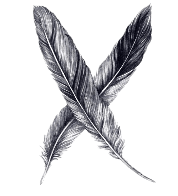 Drawing feather. Feathers transparent png stickpng