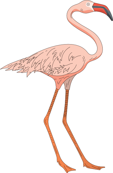 Drawing flamingos legs. Flamingo clipart legged animal