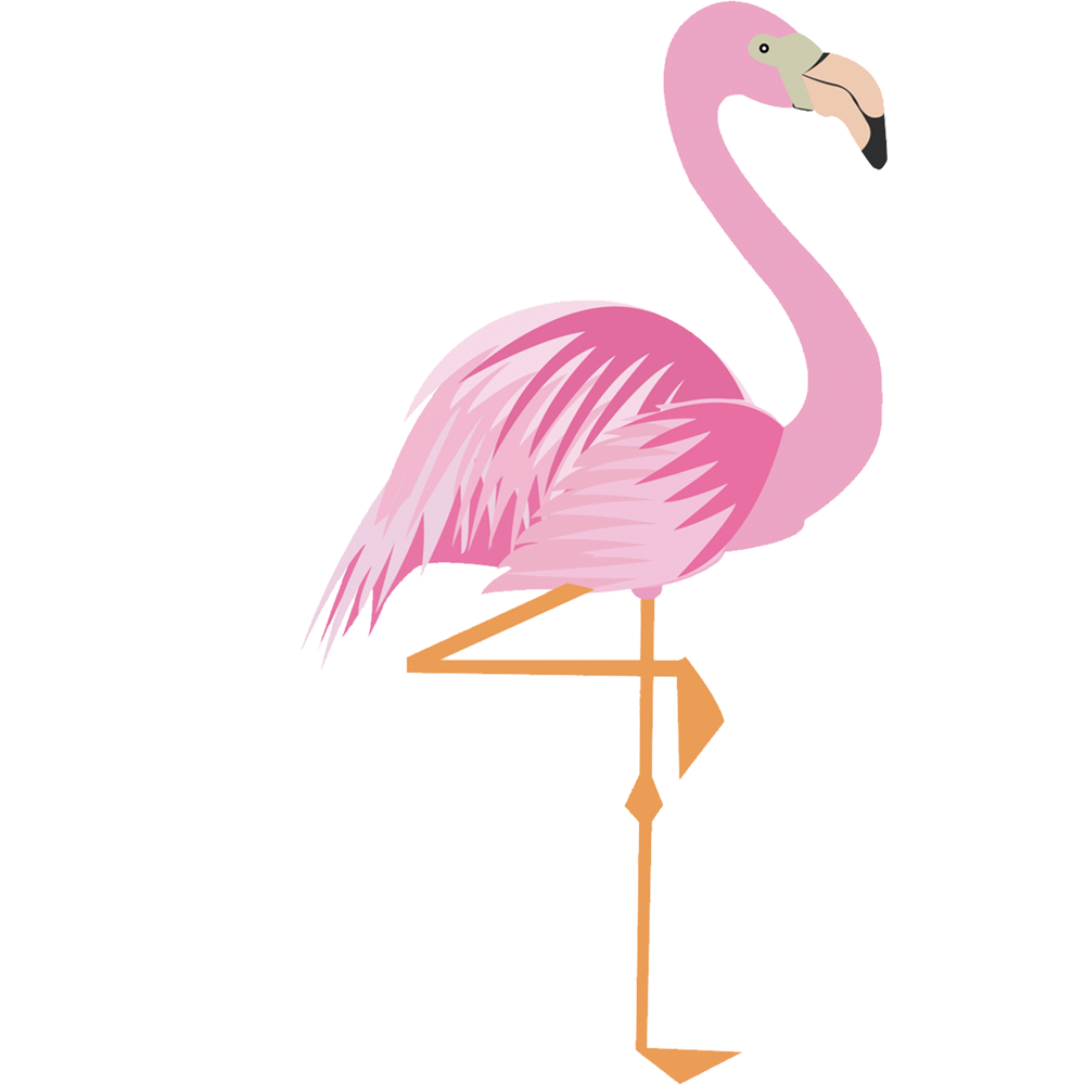Drawing flamingos png. Collection of flamingo