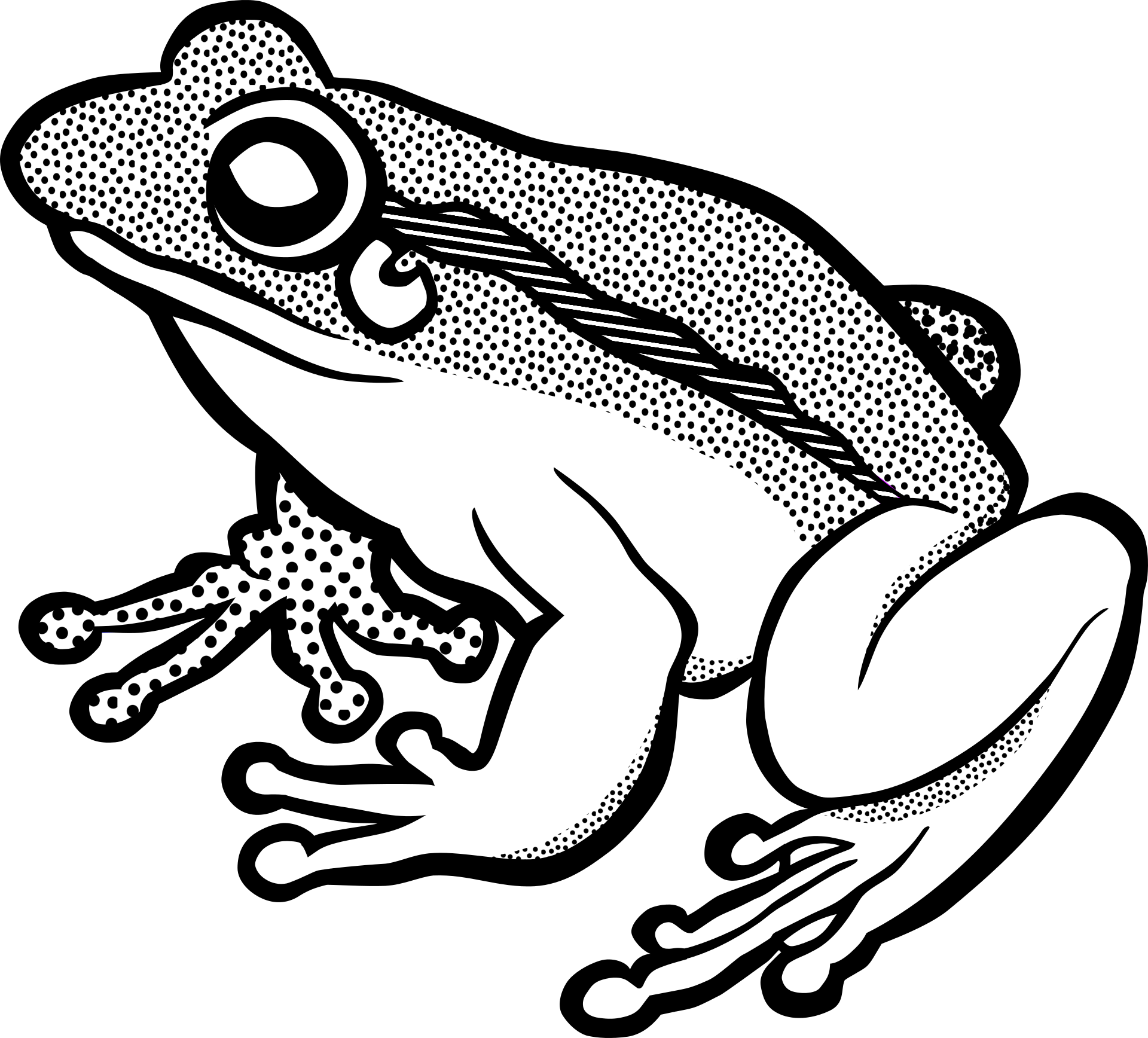 Frogs drawing black and white. Of a frog free