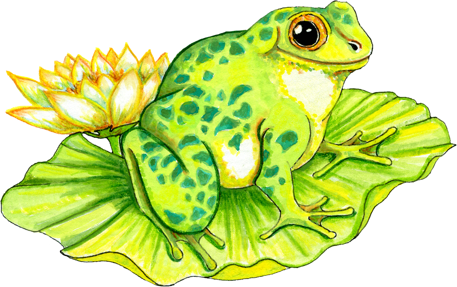 Drawing frog lily pad. Collection of on