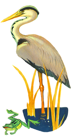Drawing frog wing. Heron clipart