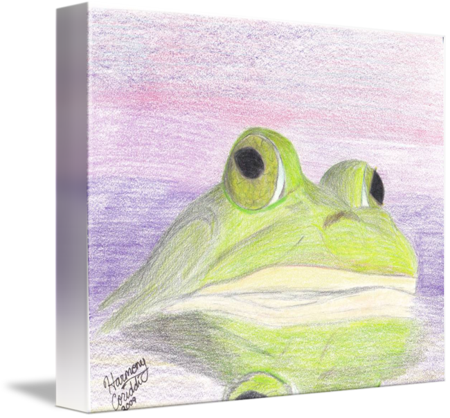 Drawing frogs bullfrog. A bull frog at