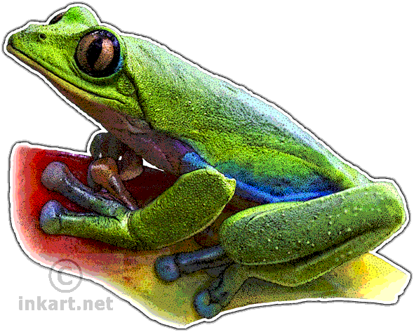 Drawing frogs leaf. Blue sided tree frog