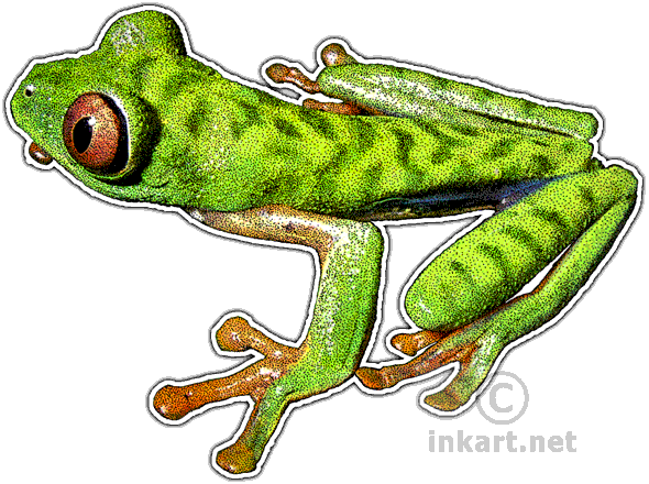 Drawing frogs leaf. Parachuting red eyed frog