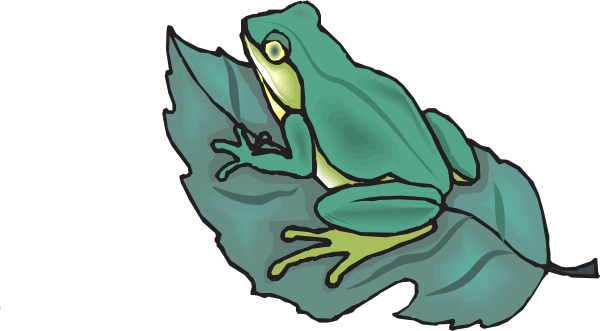 Drawing frogs leaf. Frog on a clip