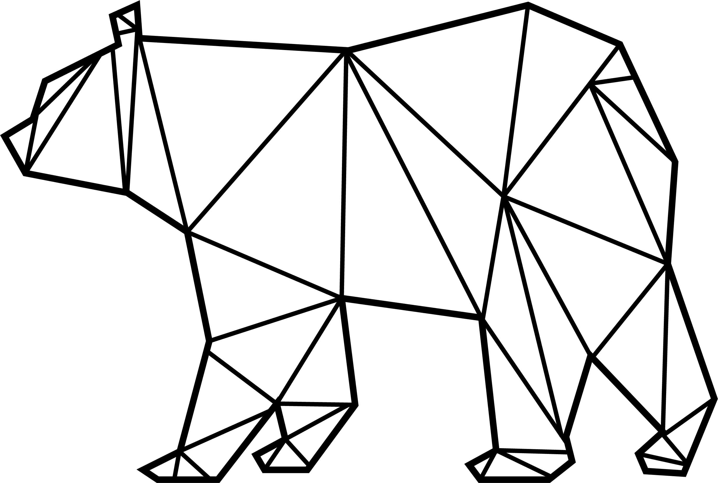 Drawing geometric beginner. I made a grizzly