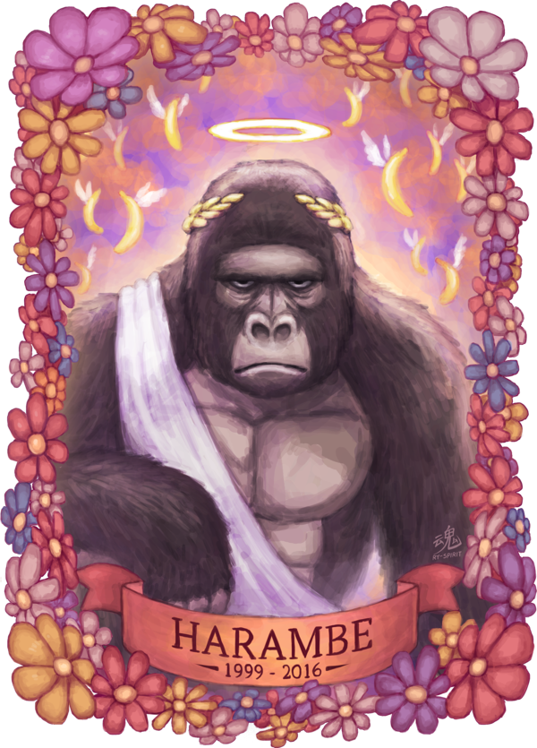 Drawing gorillas harambe. By ry spirit on