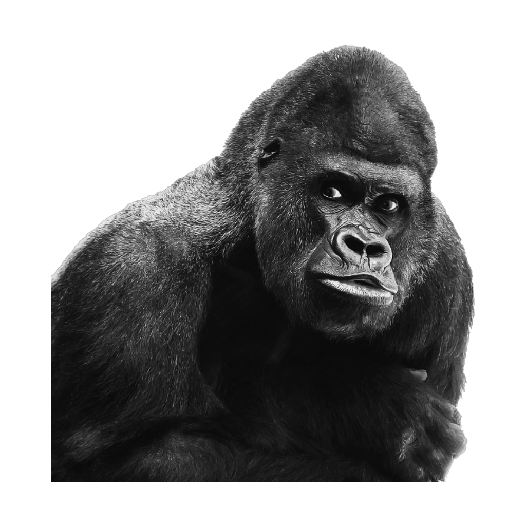 Drawing gorillas wild animal. Mq gorilla ape kingkong