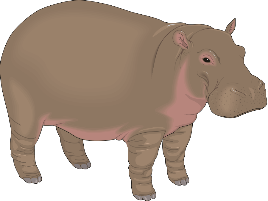 Drawing hippopotamus animal african. Hippo png images free