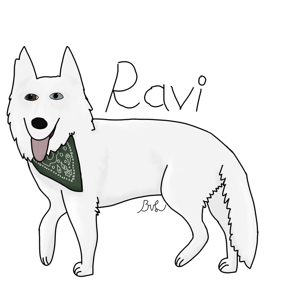Drawing husky art work. A named ravi by