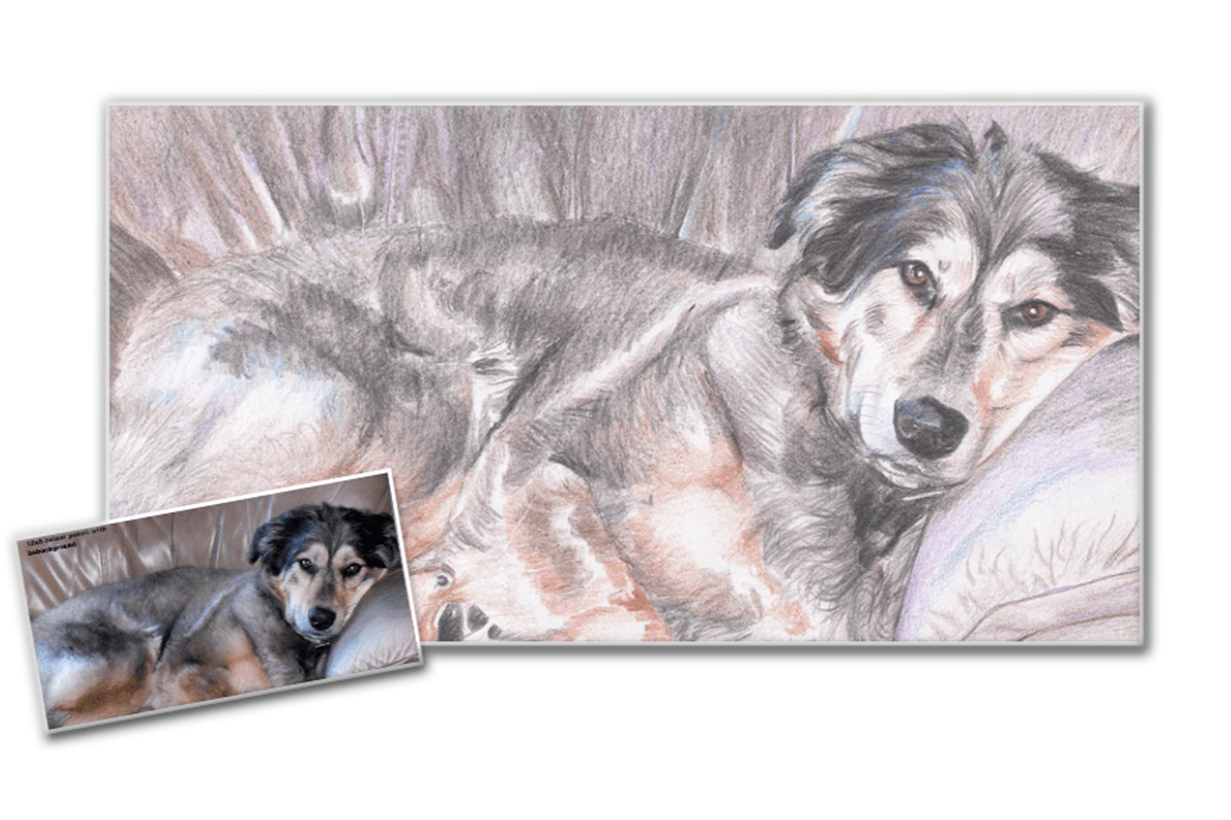 Drawing husky colored pencil. Color paint from picture