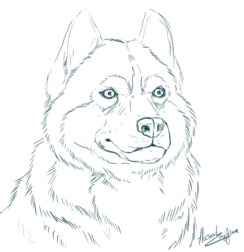 Drawing husky colouring page. Amazing coloring pages print