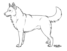 Drawing husky detailed. Free siberian lineart by