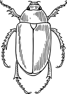 Drawing insect small. Bug clip art at