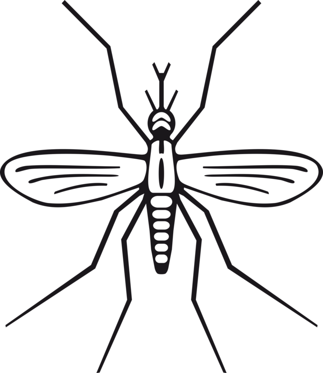 Drawing insect basic. Marsh mosquitoes computer icons