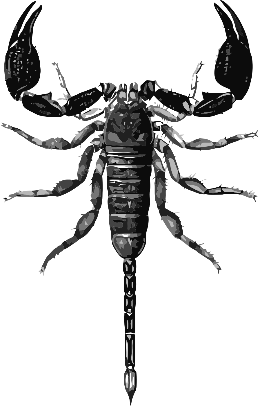 Drawing insect biological. Scorpion illustration scorpions transprent