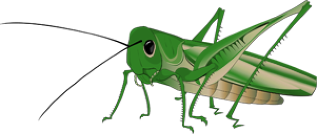 Locust drawing cricket. Insect at getdrawings com