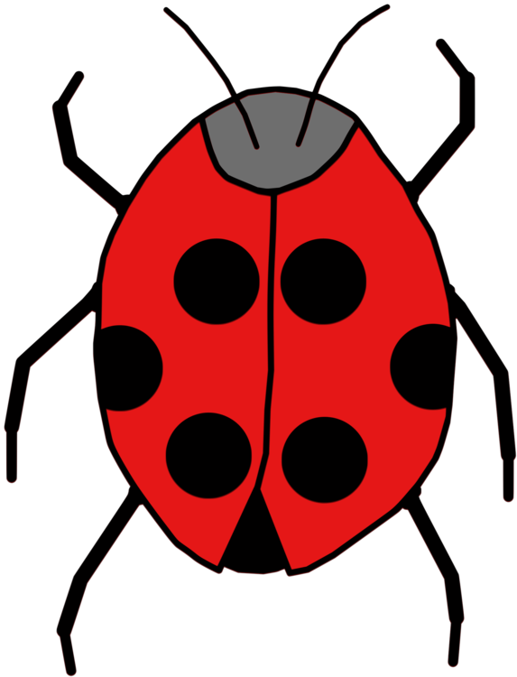 Drawing insects ladybird. Beetle insect cartoon animal