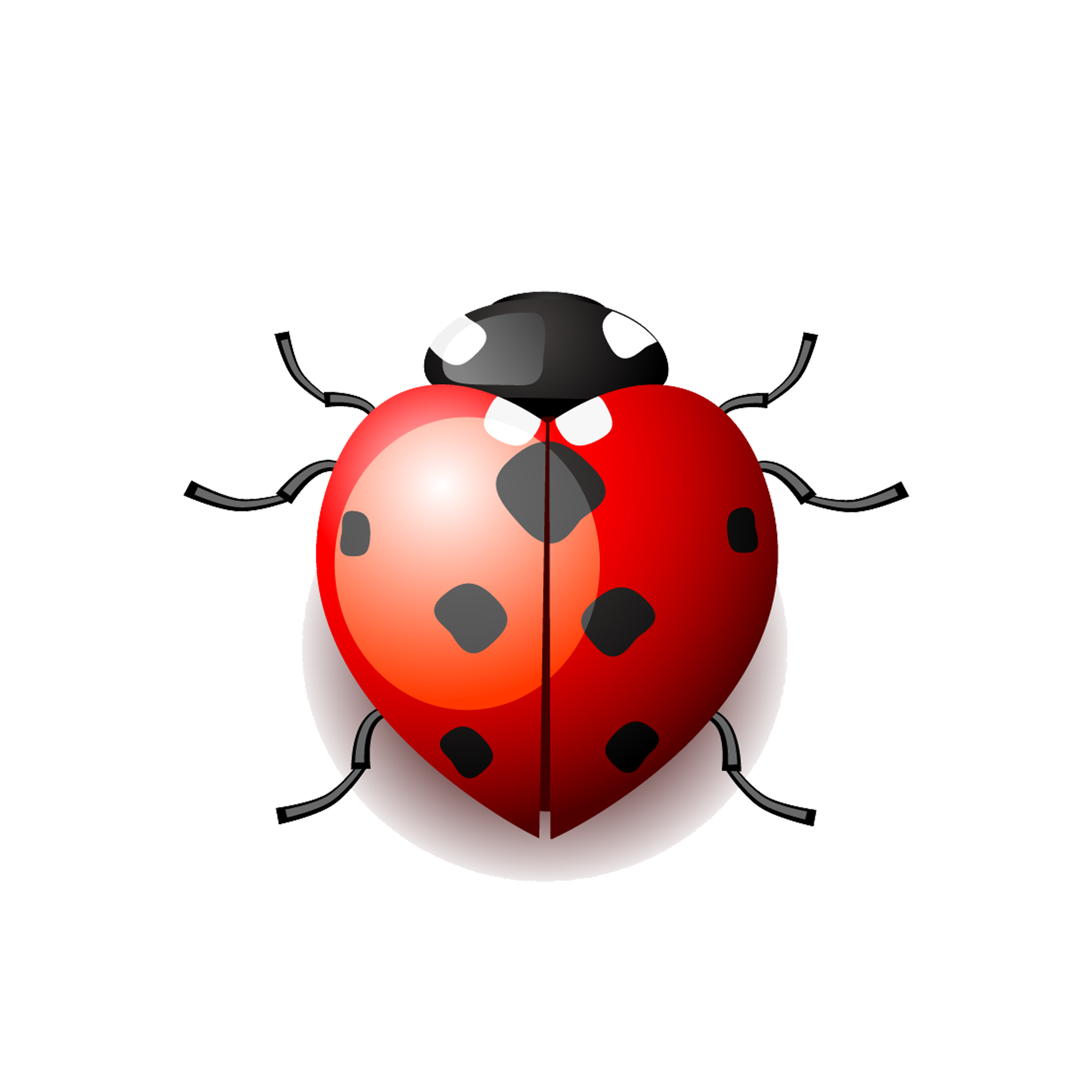 Drawing insects ladybird. Cartoon clip art ladybug
