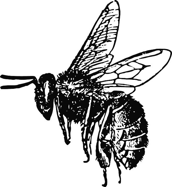 Drawing insects insect wing. Free image on pixabay