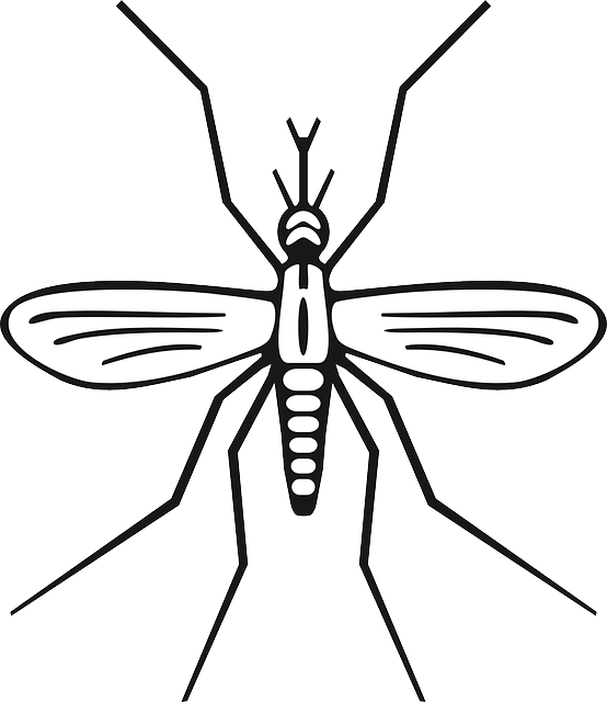 Drawing insect simple. Mathematics and scientific methodology