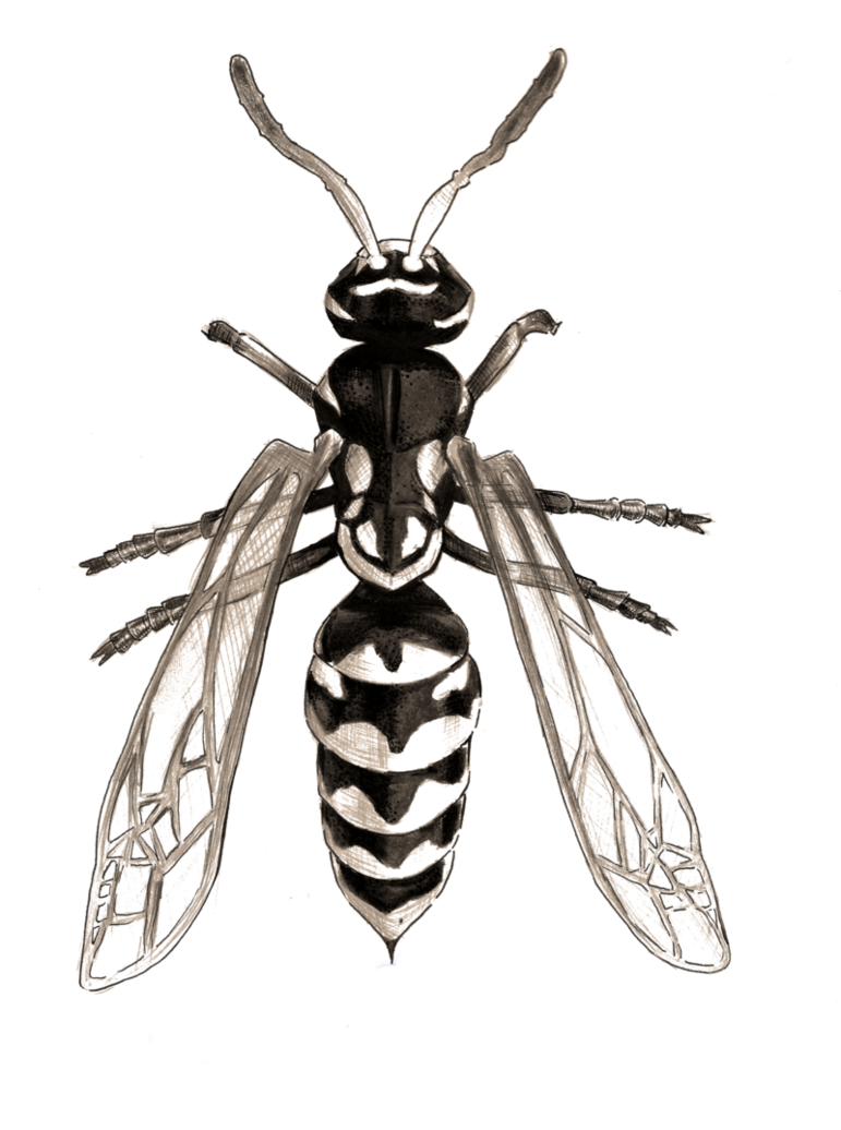 Drawing insect wasp. Paper by artsycantabile on