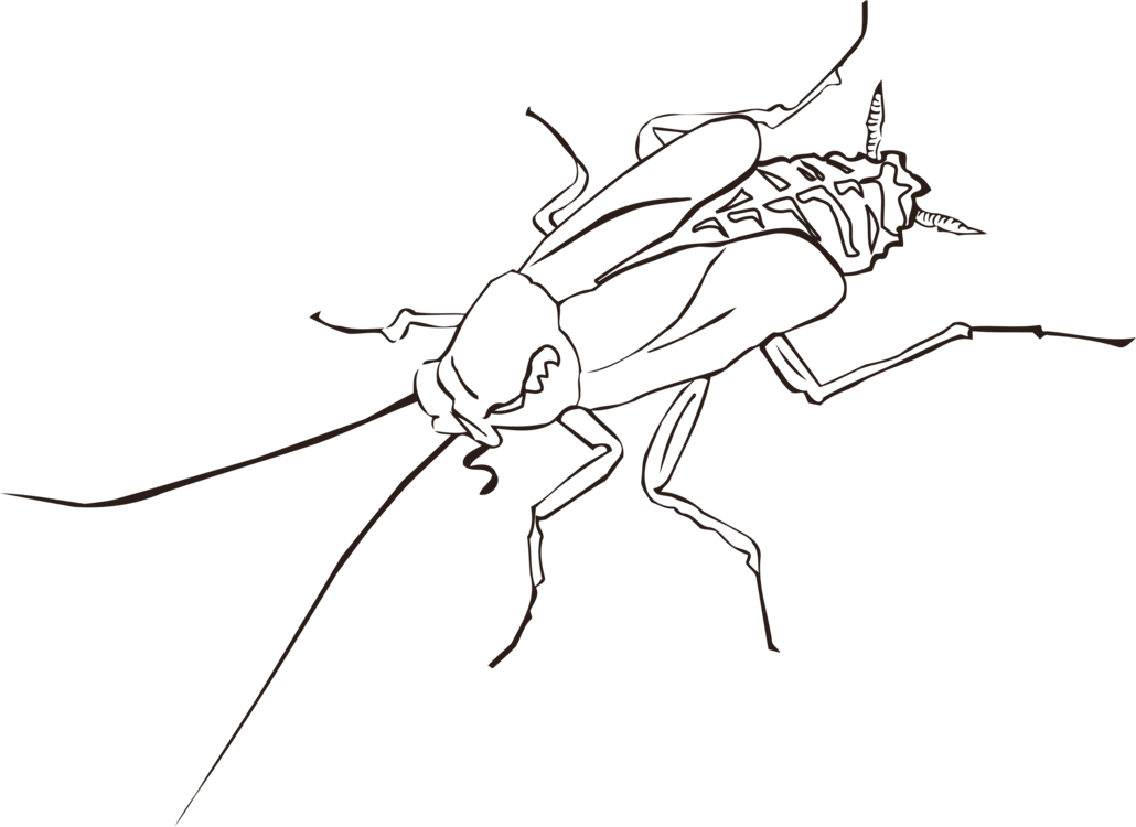 Drawing insect wing. Cockroach pest free commercial