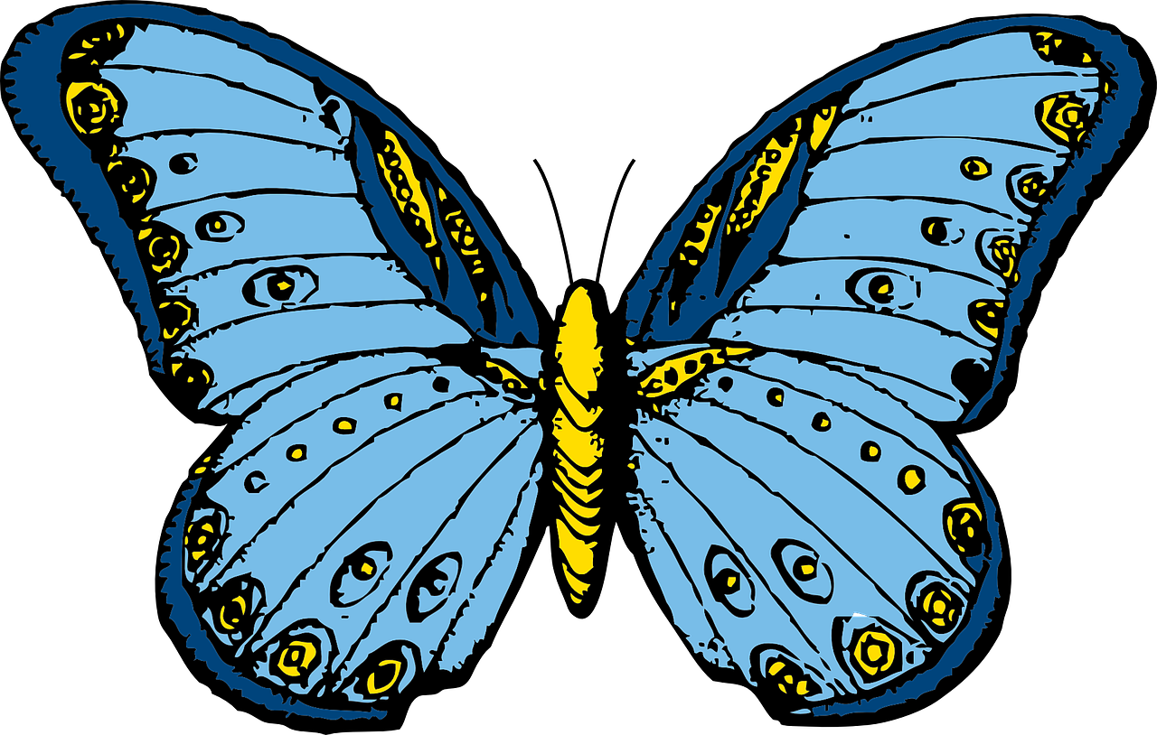 Drawing insects butterfly. Insect polymorphism transparent image