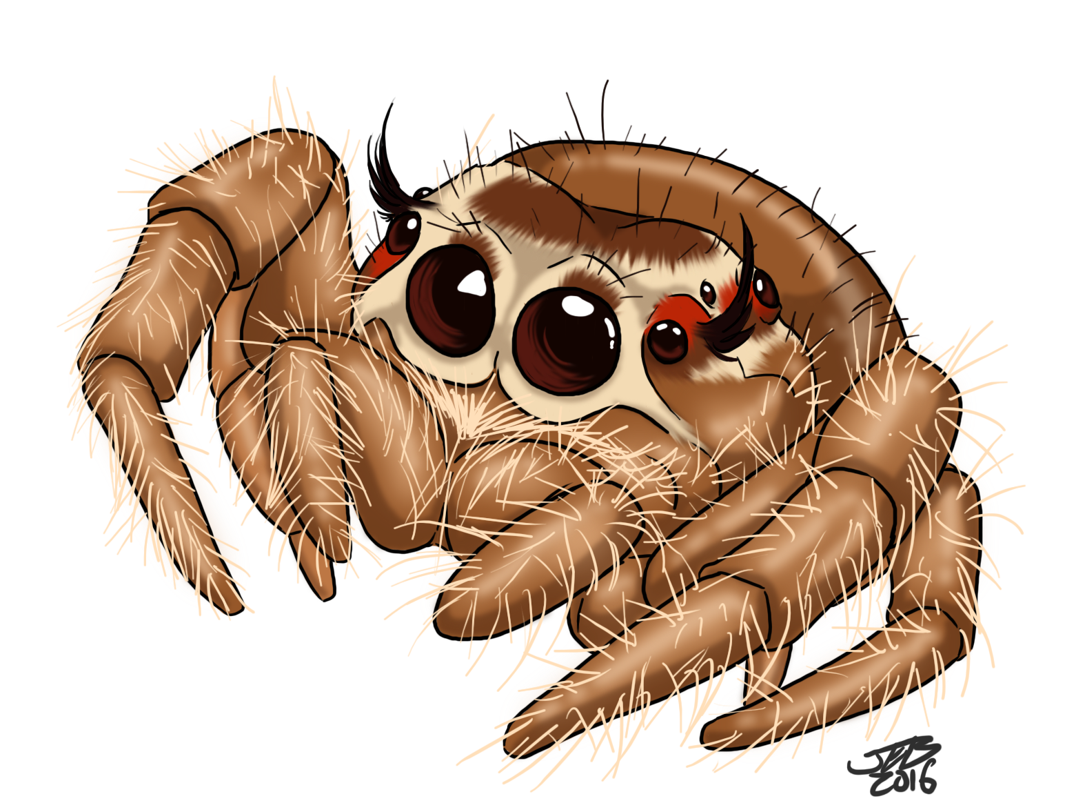 Frogs drawing neo traditional. Cute jumping spider by
