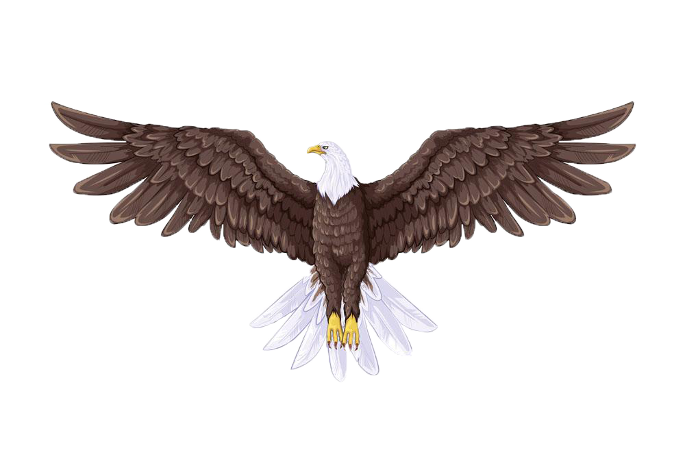 Drawing it full body. Eagle drawings eagles for
