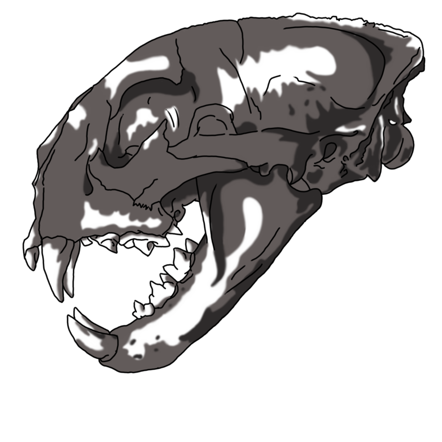 Drawing items inanimate object. Gathering item cougar skull
