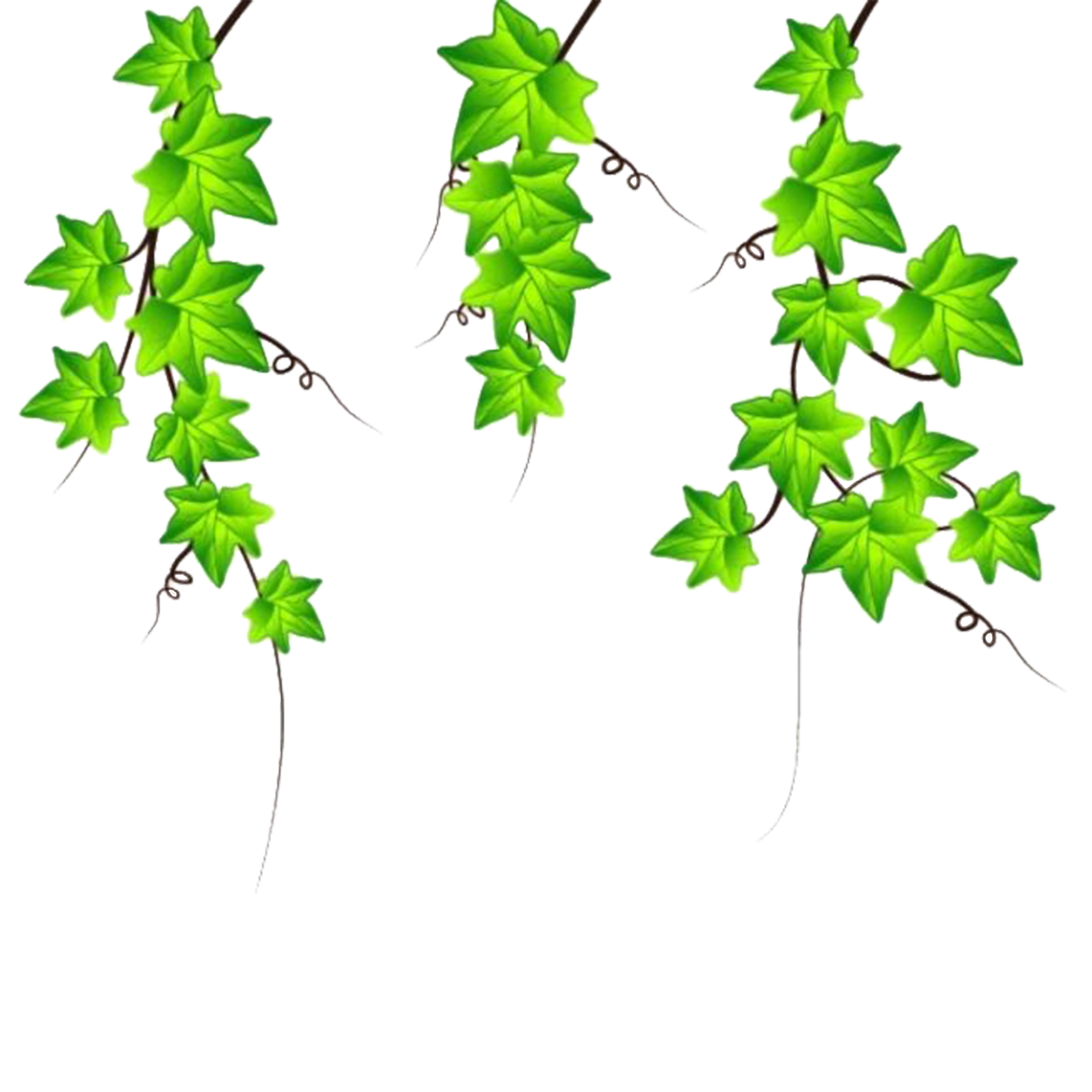 Drawing ivy. Clip art vines are