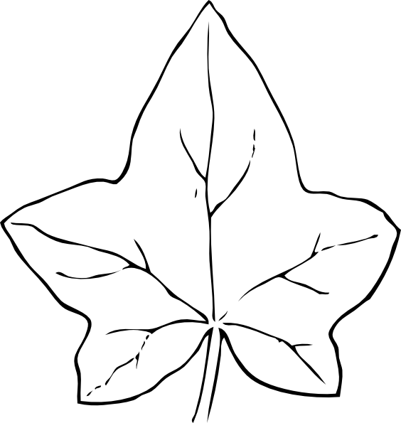 Leaf clip art at. Drawing ivy freeuse stock