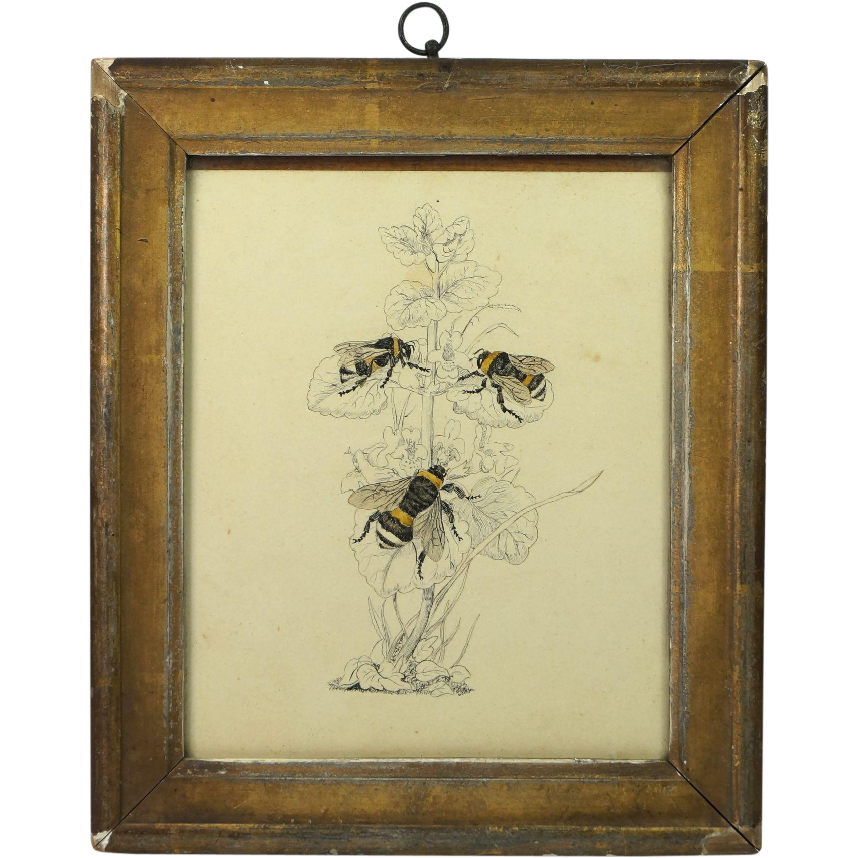 Drawing japan 19th century. Antique bee pen and