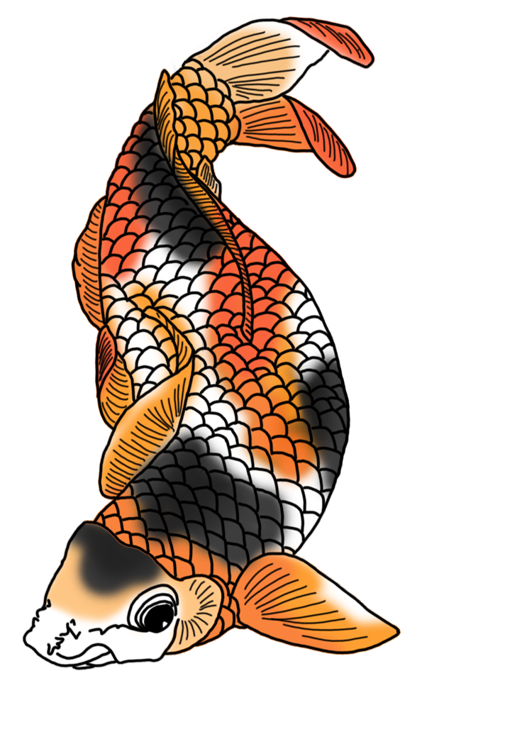 Drawing japan colored. Colorful koi fish drawings
